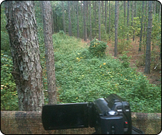 WeHuntSC.com - The view over the remote food plot