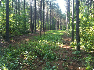 WeHuntSC.com - Remote Food Plot Update Image 2
