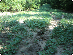 WeHuntSC.com - Food Plot 2 Location Image