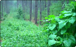 WeHuntSC.com - Remote Food Plot Pic