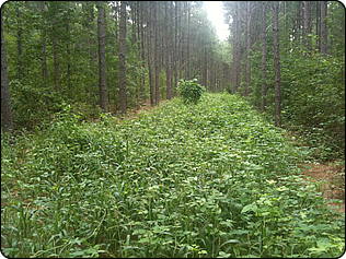 WeHuntSC.com - Tecomate Seed - GroundHog MAX Remote Food Plot Update Pic