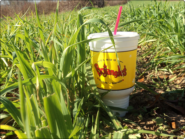 WeHuntSC.com - Tecomate Seed Max Attract as high as a Bojangles Cup