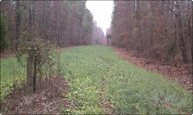 WeHuntSC.com - Tecomate Seed Max Attract Power line Plot