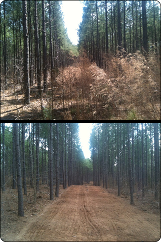 WeHuntSC.com - The Remote Food Plot Before/After Shot