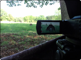 WeHuntSC.com - The view from inside the blind