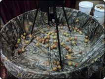 WeHuntSC.com - Apple Tree Game Feeder