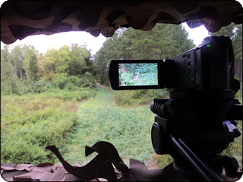 WeHuntSC.com - Camera videoing the doe in the soybeans