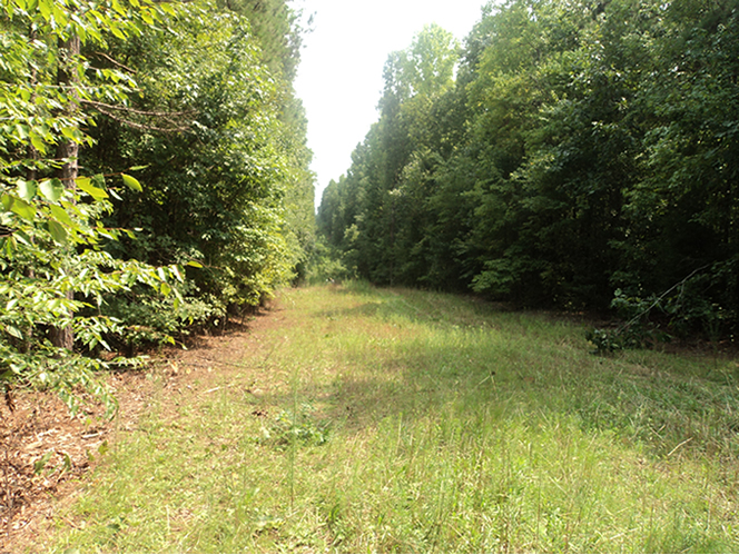WeHuntSC.com - The food plot before spraying