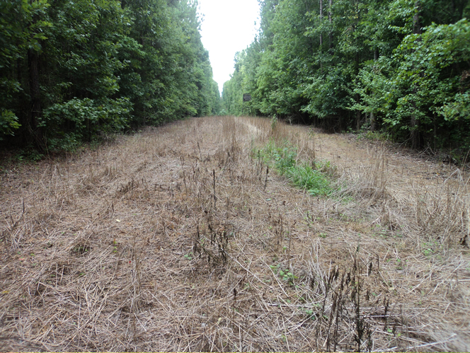 WeHuntSC.com - Food Plot after spraying