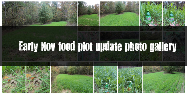 WeHuntSC.com - Early November Food Plot Update Photo Gallery