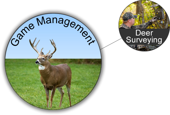 WeHuntSC.com - Deer Surveying