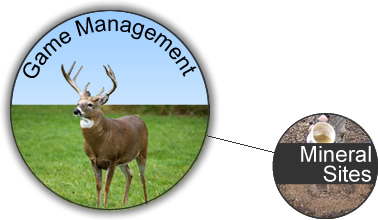 WeHuntSC.com - Game Management & Mineral Sites