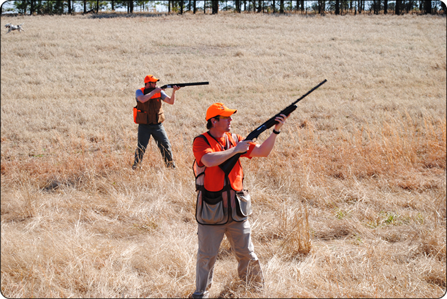 WeHuntSC.com - Scot Efird & friends quail hunting at Moree's Preserve in Society Hill, SC