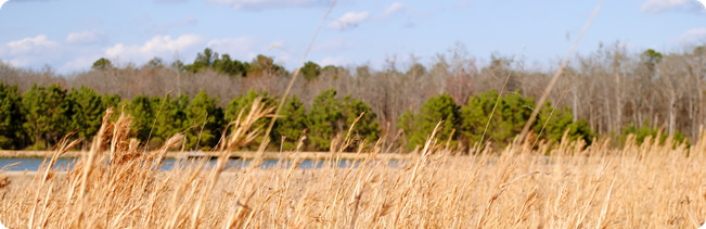 WeHuntSC.com - A view of the field on a quail hunt at Moree's Preserve in Society Hill, SC
