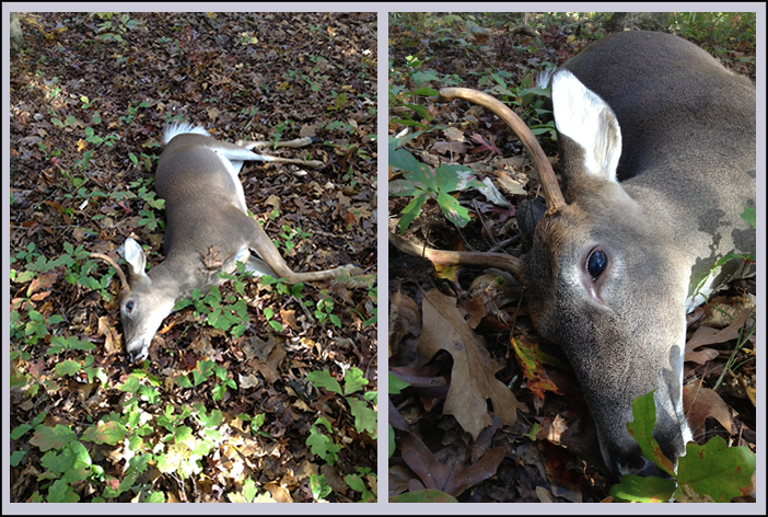 Cull Bucks - Should you cull a buck?