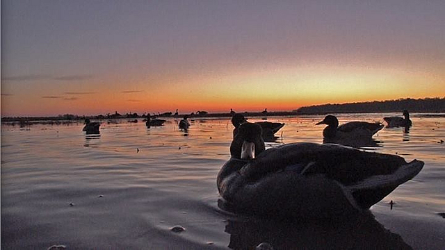 Decoys on the water in Arkansas