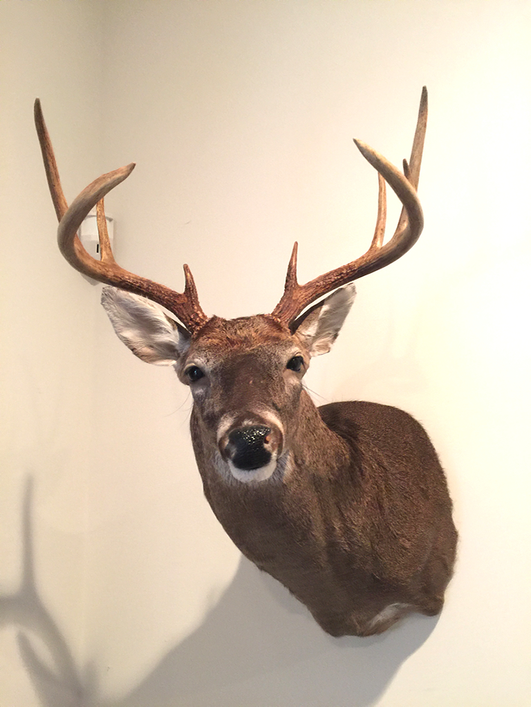 Sutton's Taxidermy 9 Point Buck