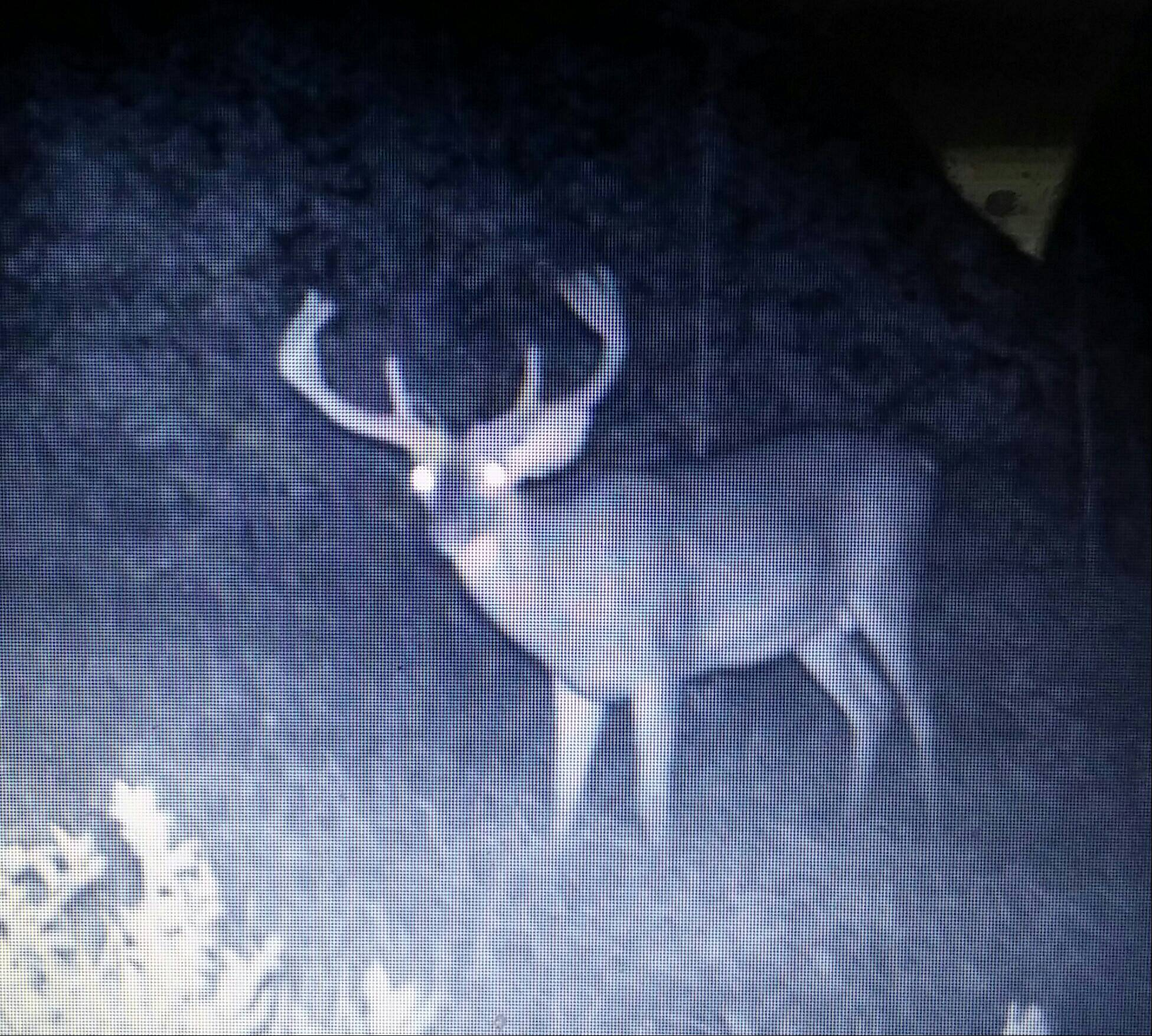 The Buck on Game Camera Pre-Season
