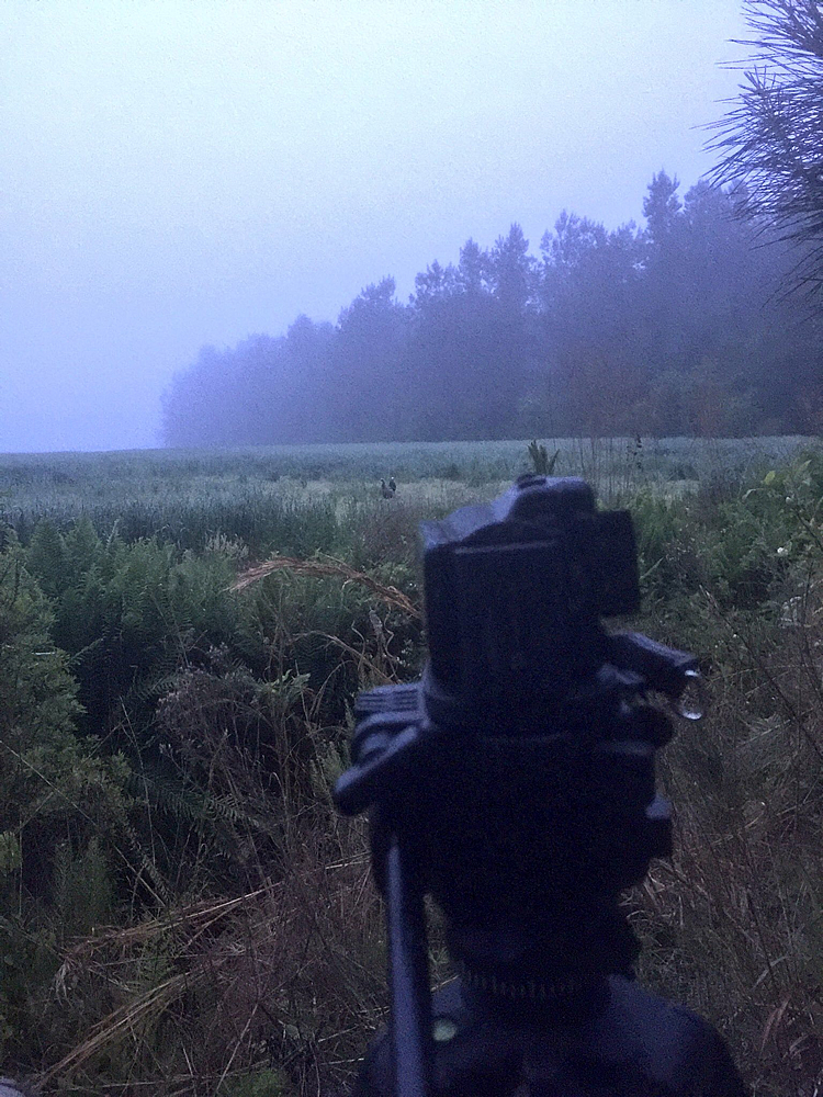 Foggy morning turkey hunting in SC