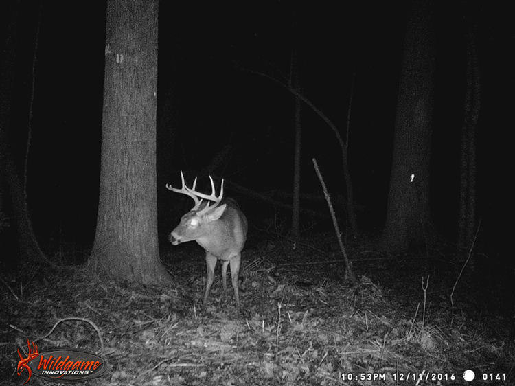 Big Dook's Brother late at night on game camera