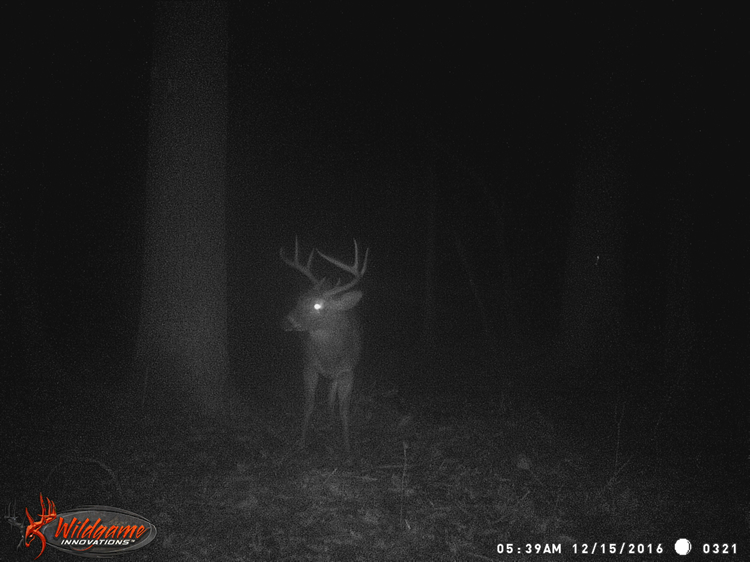 Big Dook's Brother on game camera