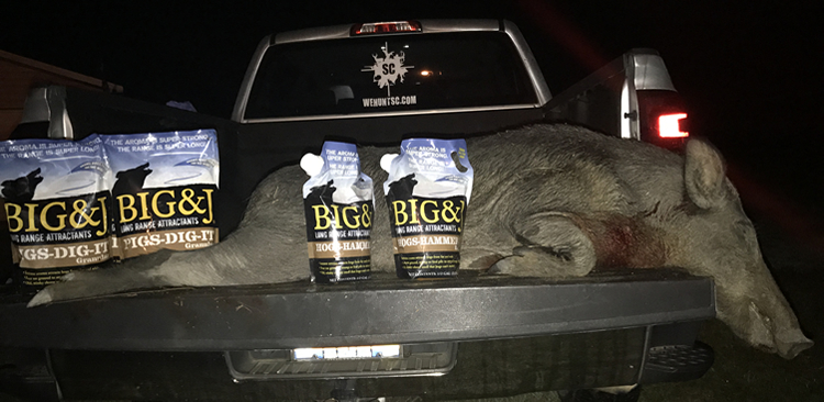 South Carolina Nuisance Hog on Truck with Big and J Hog Attractants