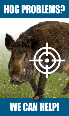 South Carolina Hog Problems - Contact Us